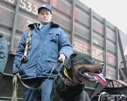 dp.uz.gov.ua: Воєнізована охорона Придніпровської залізниці на минулому тижні присікла дев'ять крадіжок вантажів та майна