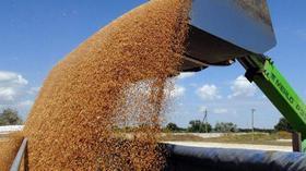 dp.uz.gov.ua: Придніпровська залізниця щодоби навантажує понад 5 тисяч тонн зерна нового врожаю