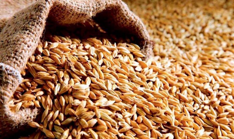 dp.uz.gov.ua: У липні Придніпровська залізниця перевезла зерна нового врожаю майже на 40% більше, ніж торік