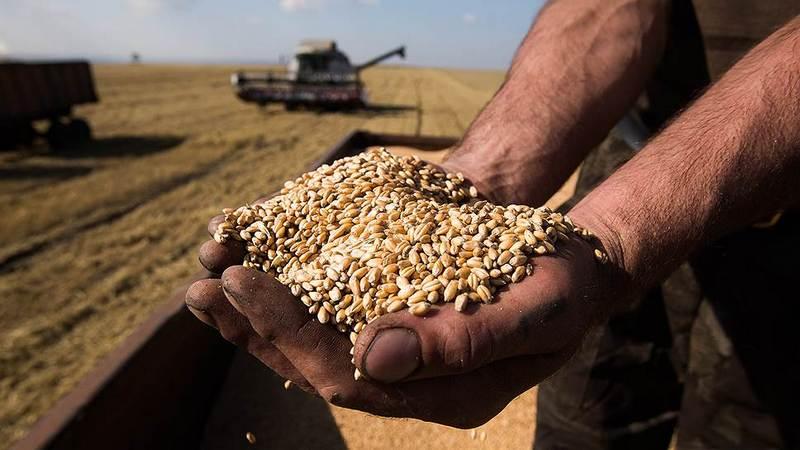 dp.uz.gov.ua: У 2019 році придніпровські залізничники на 15% збільшили обсяги навантаження зерна
