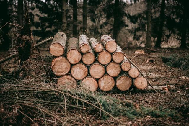 dp.uz.gov.ua: Воєнізована охорона Придніпровської залізниці затримала                       «чорних» лісорубів, які знищили майже два десятки дерев