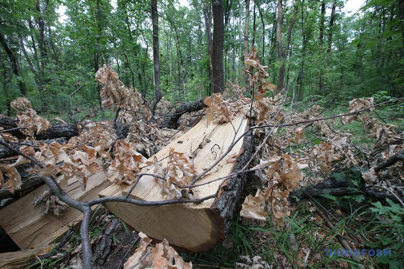 dp.uz.gov.ua: З початку року стрільці ВОХОР затримали 57 «чорних» лісорубів
